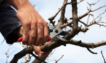 Tree Pruning in Aurora CO Tree Pruning Services in Aurora CO Quality Tree Pruning in Aurora CO