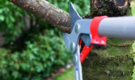 Tree Pruning Services in Aurora CO