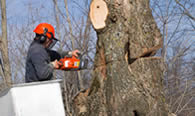 Tree Removal in Aurora CO